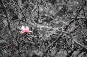 a flower amongst the twigs