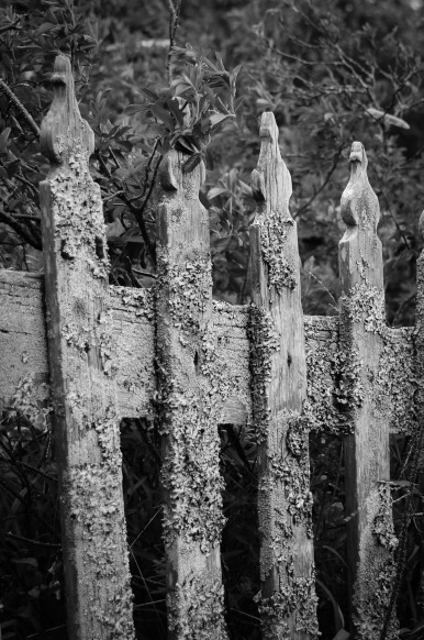 fences with lichens