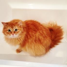 Is it bath time?