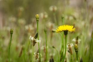 Random wild flower