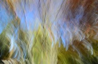 Treetops @ The Queenstown Botanical Garden