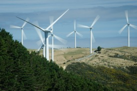 One non-working turbine amidst a sea of whirligigs.