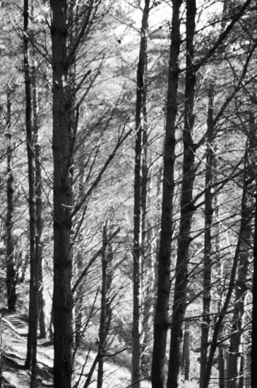 Trees @ Makara