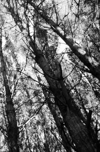 Trees @ Makara (I like this image a lot!)