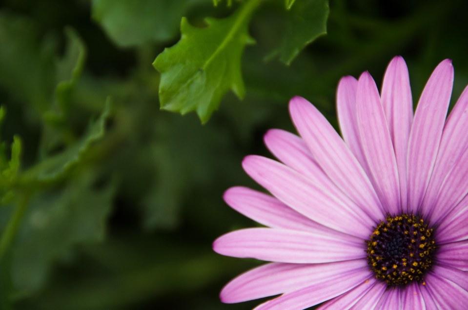 No. 3: Purple Flower @ Petone