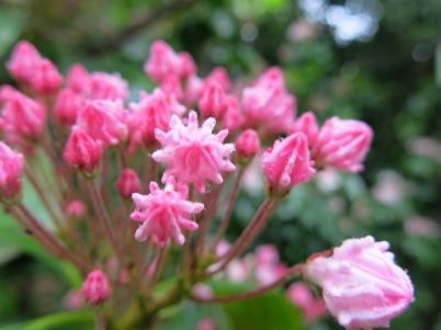 Flowers at Isabella Plantation