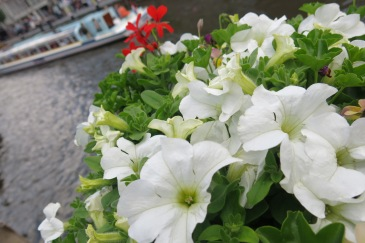 Flowers over bridges