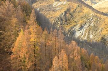Mountains through the trees