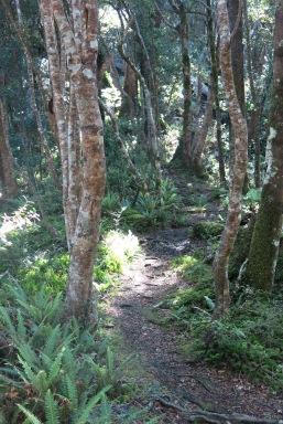 The path to Cone Hut