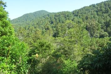 View from Tututwai Hut