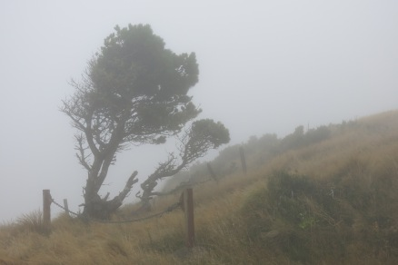 Almost at the top. Stopped at this point, to misty to go further up.