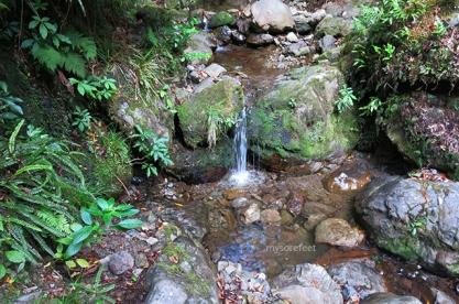 The Creek where I first slipped