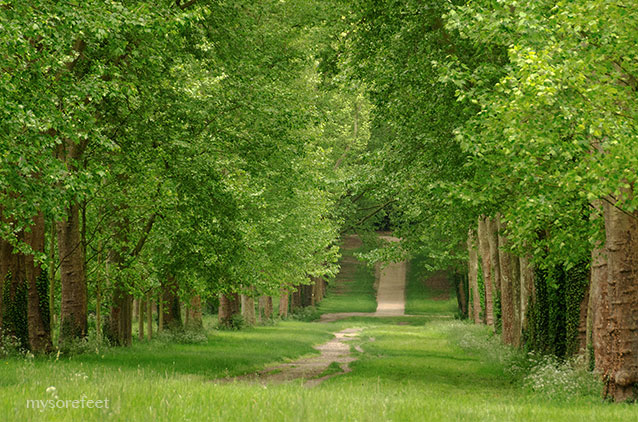Lovely path I saw while searching for a way back to the gardens at Versailles
