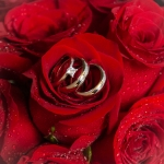 Rings among the roses - I like this image the most.