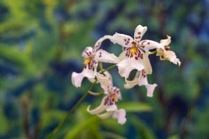 2019 taranaki orchid show (january)-20 resized