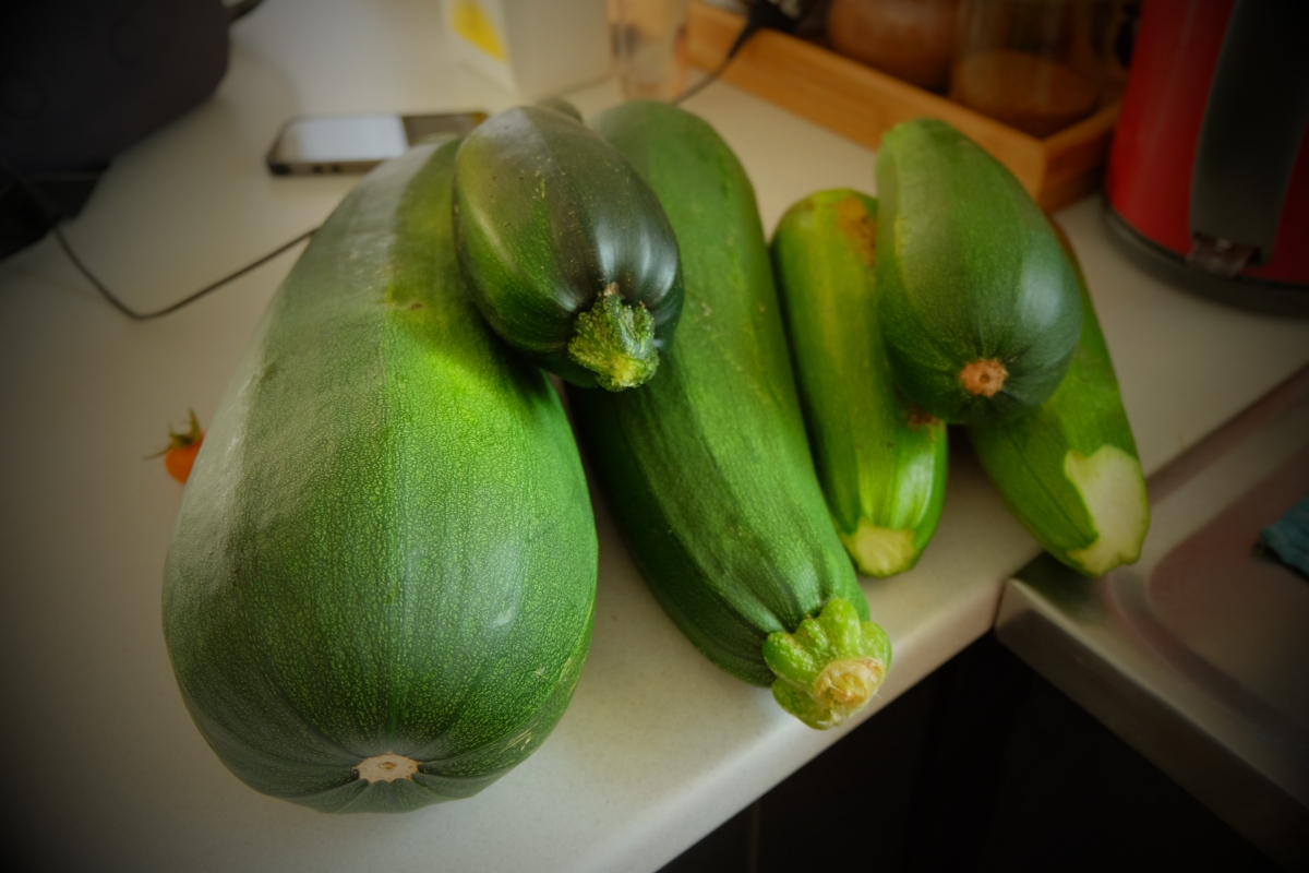 Zucchini Saturday